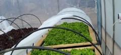 Agricultores de comunas rezagadas trabajan en cultivos hidropónicos