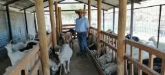 Criancero de Rincón las Chilcas  en Combarbalá amplía sus técnicas para enfrentar la sequía